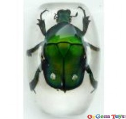 Real Green Rose Chafer Beetle Insect Magnet