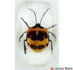 Real Resin Tea Seed Bug Magnet